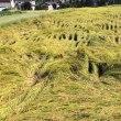 安曇野の宿から・新米の収穫