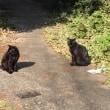 「冬支度」と「のら猫の黒ちゃん」兄弟発見!(^ ^)