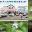 """道の駅""""花夢里""""は花いっぱい"""