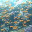 9月17日(月)!世界遺産『玄界灘 沖ノ島!』のふもとの水中世界を楽しんできたよ!!