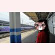 ハイカラ新幹線