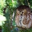 OWL(chicago)