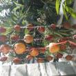 今年はちょうどいいぐらい柿がなりました。