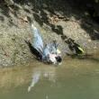 オナガの水浴び