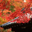 禅寺の紅葉 1