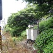 線路内緑 Les espaces vertes dans le chemin de fer