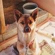 しおんの会:保護犬クッキーの飼い主さんが決まりました
