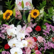 6月18日 明日の誕生花・ゆかりの花 花言葉は?(*^O^*)☆
