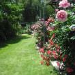 ツルバラの花が並んでます。