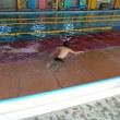 1,2年水泳学習