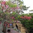 南国の花「トックリワタの木の花終盤