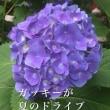 和のすすめ(65)ガッキーが夏のドライブ連れてって!!:ga kki- ga na tsu no do ra i bu tsu re te tte