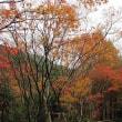 秋深まり 奥河内の紅葉めぐり