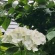 初夏から夏 花・実3