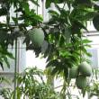 熱川バナナワニ園の植物群