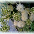 ウコギ科の植物&鳥たち