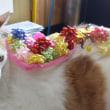 母の日にカーネーション動画でお祝いする猫Happy mother's day