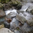 増水のイワナ