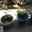 2014 ゴーヤ植えました。 グリーンカーテンになるかな?