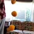 セキグチ農園の渋柿