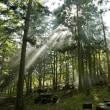 森の小さな風車
