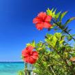 今日は沖縄返還になった日!