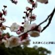 ただ歩くことが嬉しく梅の花