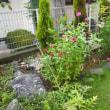8月の九想庵の庭
