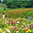 【ご当地スポット】オープン迫る!箱館山ゆり園♪