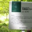 長野県松本市、安曇大野田のフジキ(ナンジャモンジャの木)です!!