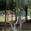 北柏ふるさと公園 野鳥の撮影に・・・すぐ近くで3人が水難事故!!