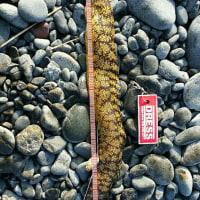 夏の海は楽しい(^^)干物おっさんになる(・・;)