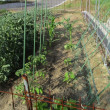 野菜の支柱立て