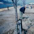 桜土手の清掃