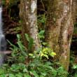 4474 滝の景観