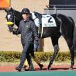 エレクトロポップの転厩先は美浦・田村康仁厩舎に♪