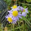 北設楽郡で咲いていた花たち・豊根村にて(10月18日)
