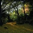 「南原寺雪舟の庭」