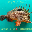 笑転爺の釣行記 7月18日☀ 浦賀港桟橋・岸壁