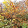 秋の旅路、私たち夫婦のささやかな旅行は、仙台市の郊外にある作並温泉に滞在プランとなり・・。