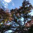 日曜朝 佐倉城址公園紅葉1週間早いか