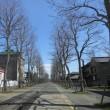 北海道開拓の村に春の花咲く