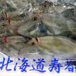 「肝」超イイね!寿都&噴火湾「カワハギ(ウマヅラハギ)」のお造り!!発寒かねしげ鮮魚店。