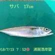 笑転爺の釣行記 7月13日☀ 浦賀港岸壁