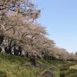 5/3 桜の風景・角館