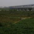 雨のなか天竜川橋梁を渡る700系新幹線 (2017年11月)