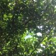 初夏の木葉