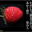 俳句写真1633 わがいちご