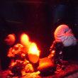 深海魚に出会う・2