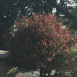 京都御苑の近くでワイヤークラフト講習
